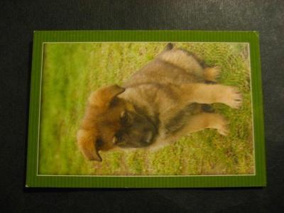 Kalendářík 2010 pes od korunky