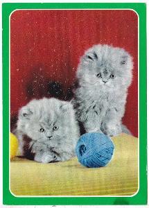 Německo - kočky