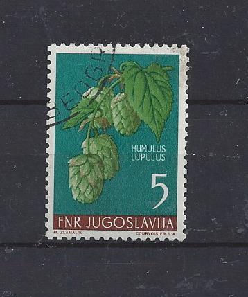 Flora - Jugoslávie chmel