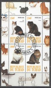 O ČAD aršík kočky 2010 - neoficiální