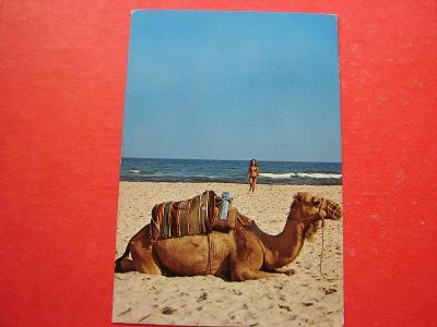 ŽENA Žena Dívky Plavky TUNISKO Moře