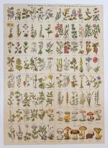 Plakát rostlin, květin, bylin a hub