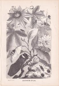 Litografie zvířata, Hmyz