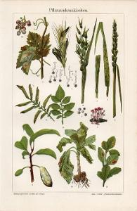 Litografie nemoci rostlin