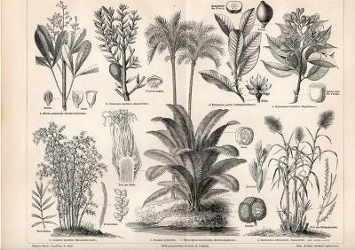 Litografie rostliny pro průmysl