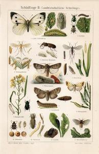 Litografie škůdci II