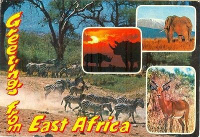 Keňa, fauna Východní Afriky, prošlá