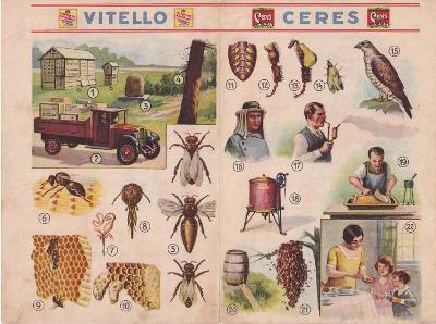 Naučné okénko Včela, Ceres Vitello