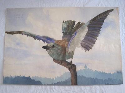 130/velký obraz O.Kříž 1920 Ptáček-orig. akvarel 54x33cm!!!!