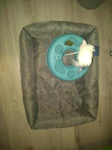 Pelíšek a hračka pro kočku