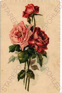 Růže plastická karta