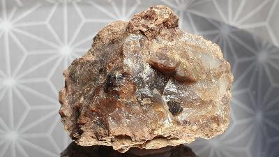 Opalizované dřevo Opál USA Nevada Virgin Valley 48x34x28mm Minerály