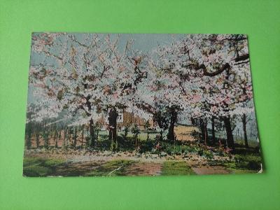 Pohlednice umělecká - kvetoucí sad, stromy, chata - dopisnice
