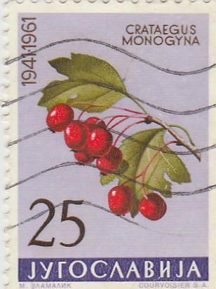 Jugoslávie - na doplnění - flóra