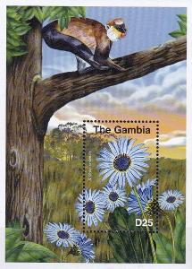 Flóra - Gambie