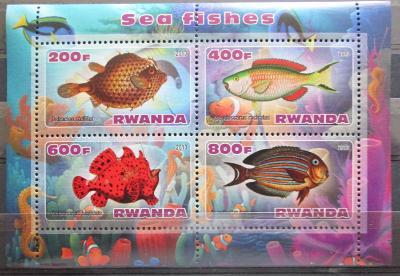 Rwanda 2013 Mořská fauna, ryby Aršík 0507