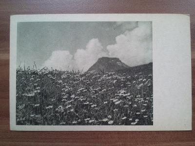 Kvetoucí louka, kopretiny, v pozadí hora a mraky