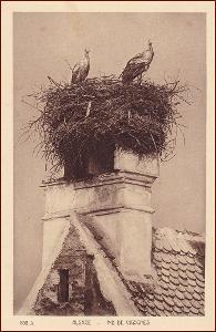 Ptáci (zvířata) * čáp, hnízdo, Alsace, Francie * M3253