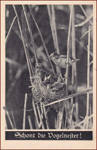 Ptáci (zvířata) * hnízdo, mláďata, propagační * M2619