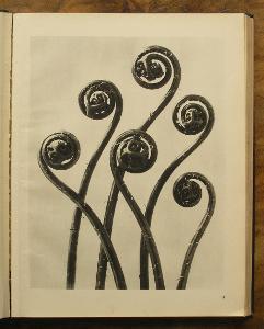 Karl Blossfeldt - 1942 - (H491)