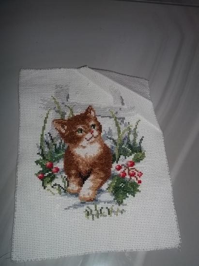 www pěkná kočička pic