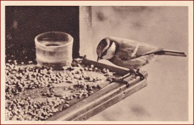 Ptáci (zvířata) * sýkora, krmítko, propagační * M4223