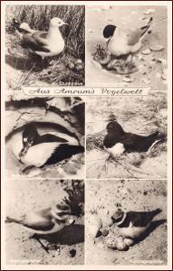 Ptáci (zvířata) * hnízdo, vajíčko, mláďata, propagační * M4249