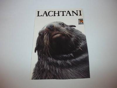 Lachtani - ZOO Praha (B84)