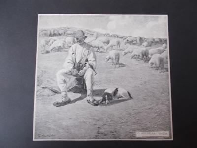 Koudelka Ovčák bača ovce pes veduta rytina