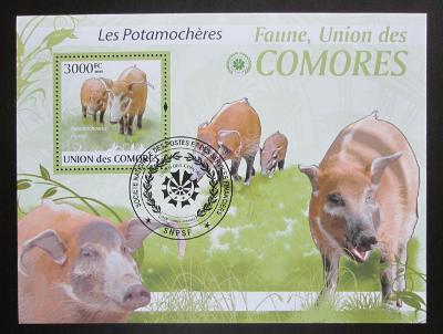 Komory 2009 Štětkoun africký Mi# Block 527 Kat 15€ 1519