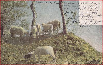 Ovce (zvířata) * stádo, pastva, stromy, umělecká * M7151