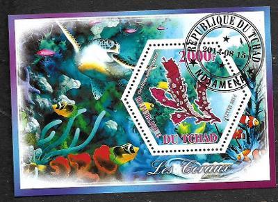 Čad 2014 - Koráli - corallina membranacea