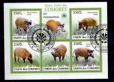 Komory 2009 - štětkoun africký