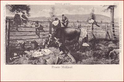 Krávy (zvířata) * lidé, ohrada, humor, umělecká * M2217