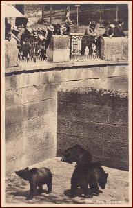 ZOO Bern * medvěd, zvířata, propagační, Švýcarsko * M4814