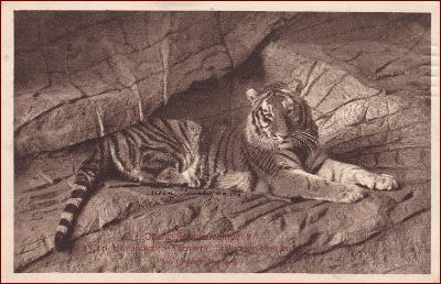 ZOO Hamburg * tygr, zvířata, propagační, Německo * M5046