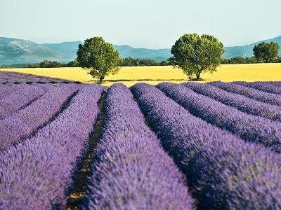 Provence s CK Mundo