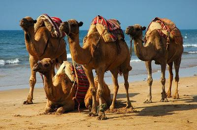 Maroko s CK Mundo