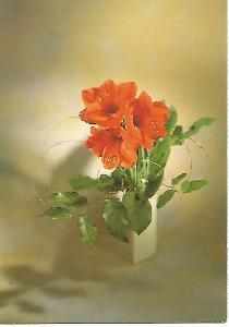 květina, design Erika Burk, Karmelitánské nakladatelství 4-950°°
